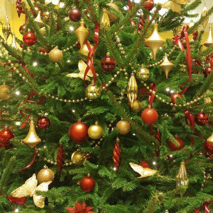 Ziemassvētku sarkanā egle