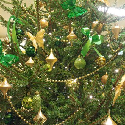 Noslēpumaini zaļā egle
